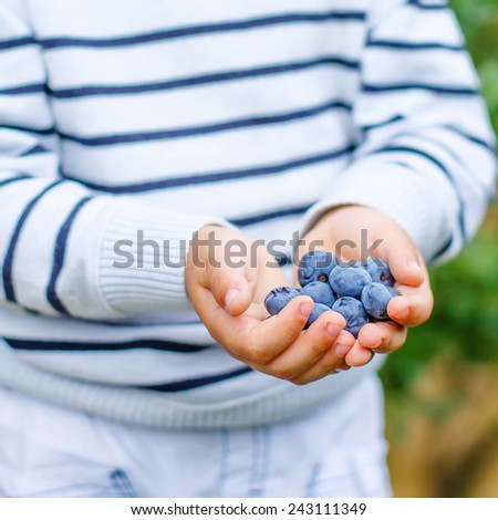 Little boy holding blueberries on organic self pick farm. Funny child eating fresh berries as healthy snack for kids and adults. Hands of child. - stock photo