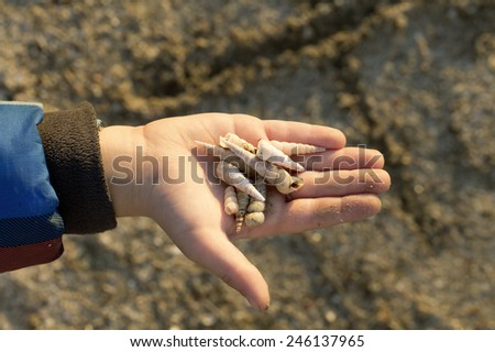 Little boy holding shells in his hand. Collecting them for making jewellery. Young Biologist. - stock photo