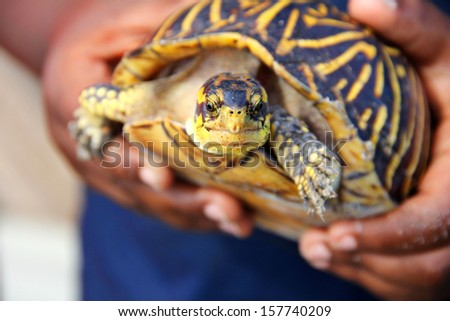 little boy holding turtle - stock photo