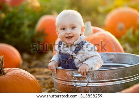 Little boy in a pumpkin patch - stock photo