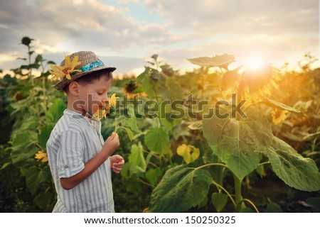little boy in a straw hat at sunset plays on the field with sunflowers - stock photo