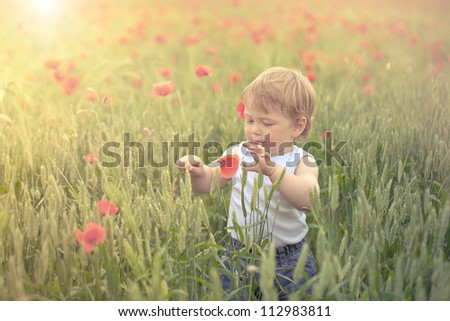 Little boy in poppy field