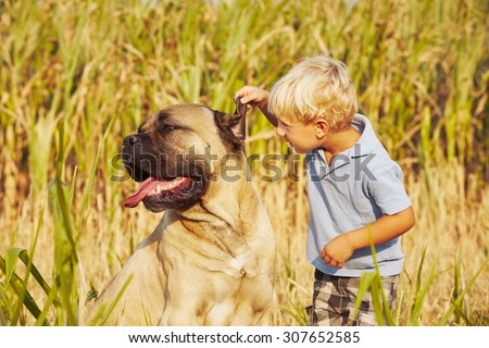 Little boy is playing with his large dog. - stock photo