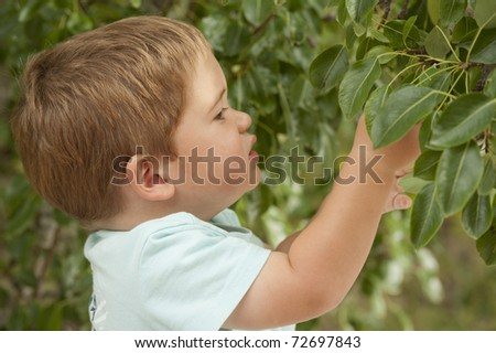 little boy looking into tree looking for fruit to pick - stock photo