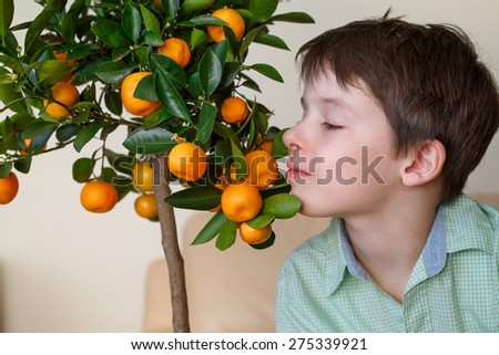 Little boy near small tangerine tree branch indoors - stock photo