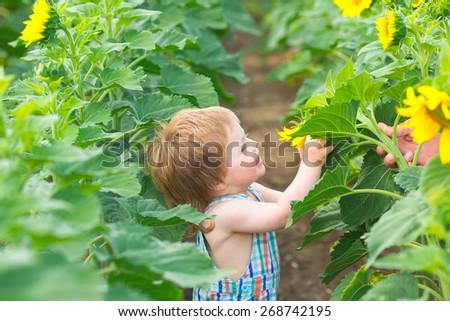 Little boy on sunflower field - stock photo