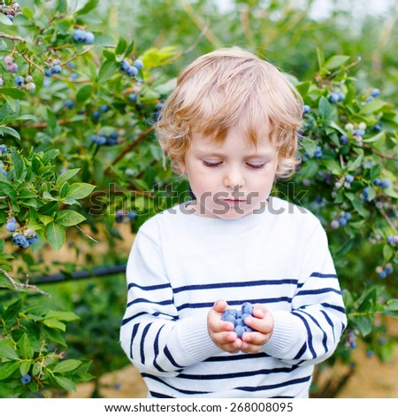 Little boy picking blueberry on organic self pick farm. Funny child eating fresh berries as healthy snack for kids and adults. - stock photo