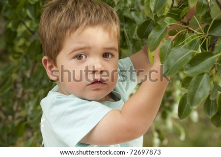 little boy picking fruit from tree - stock photo