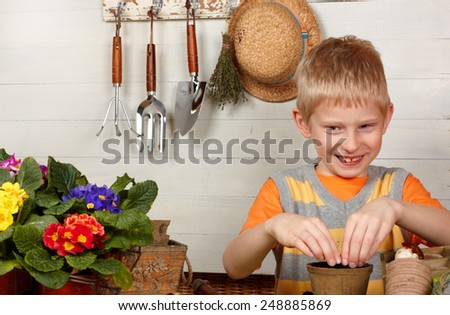 little boy planted flowers - stock photo