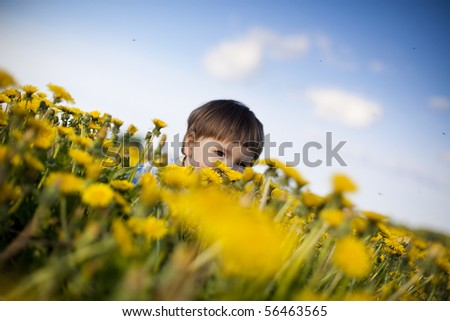 little boy playing hide-and-seek in the field of dandelions - stock photo