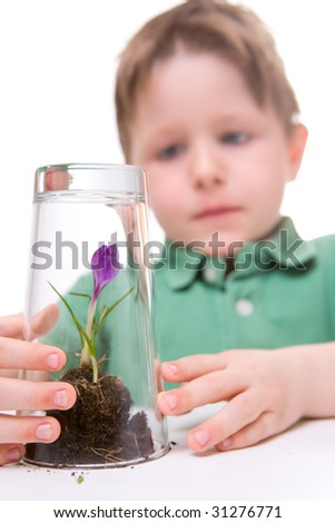 Little boy protecting young growing flower. Isolated on white.