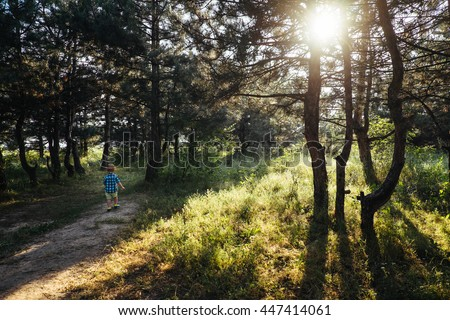 Little boy running away in beautiful green pine forest with sunny beams. Sun shining through the trees. Child, kid walking on the nature with rays. Happy childhood. Rear view. Sunlight in the park.