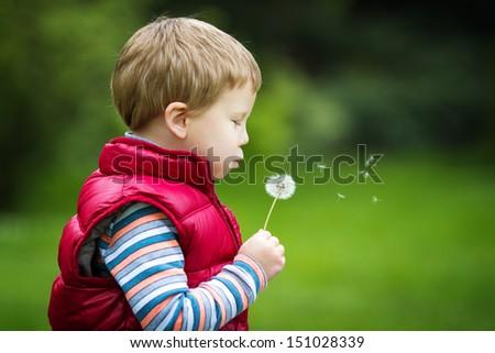 Little boy with dandelion - stock photo