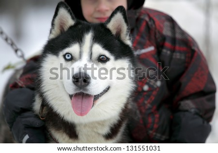 Little boy with her huski dog - stock photo