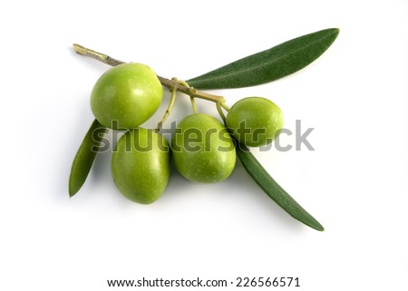 little branch of green olives isolated - stock photo