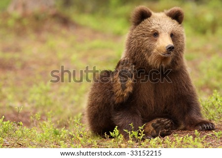 Little brown bear waving at you - stock photo