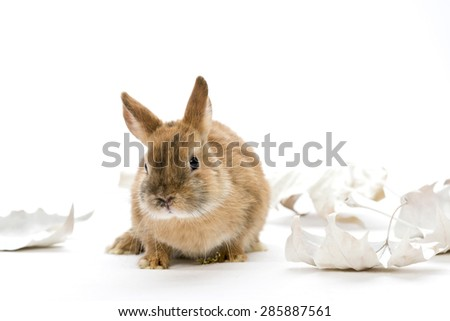 little brown bunny with white leaves on white background, studio