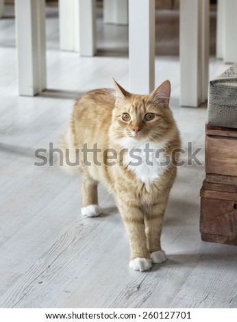 Little brown cat in animal shelter, curious cat, sad cat in blurry background, brown cat - stock photo