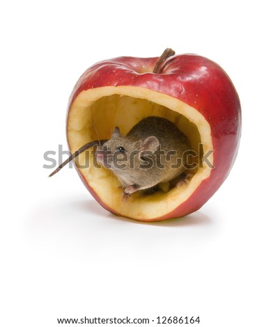 Little brown mouse sitting a big red apple - stock photo