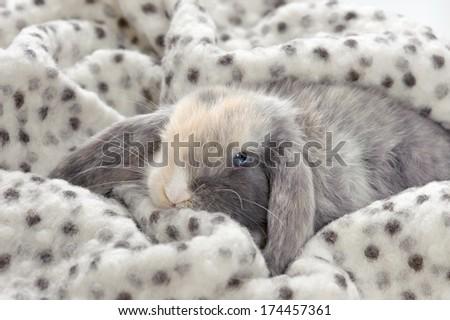 Ravelry: Sleepy Sarah amigurumi pattern pattern by Mia