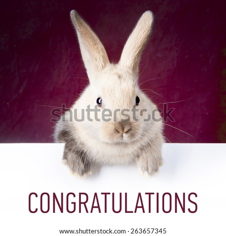 Little bunny holding a sign saying: Congratulations - stock photo