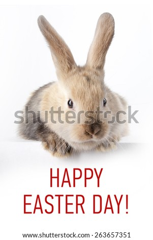 Little bunny holding a sign saying: Happy Easter Day - stock photo