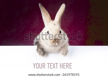 Little bunny holding a sign saying: your text here - mock up - stock photo