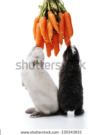 Little bunny rabbits on white - stock photo