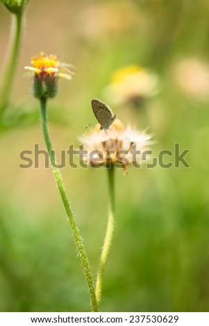 Little butterfly on grass flower in green field - stock photo