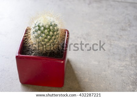 Little cactus plant in a pot - stock photo