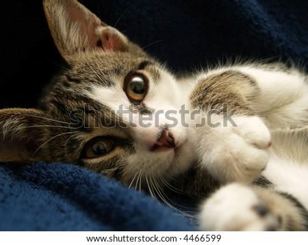 little cat - stock photo