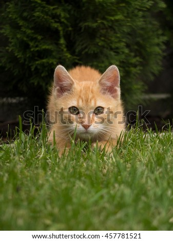 Little cat attacks - stock photo