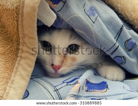 Little cat hiding under the sofa covers - stock photo