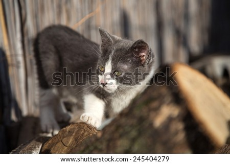 Little cat in nature  - stock photo
