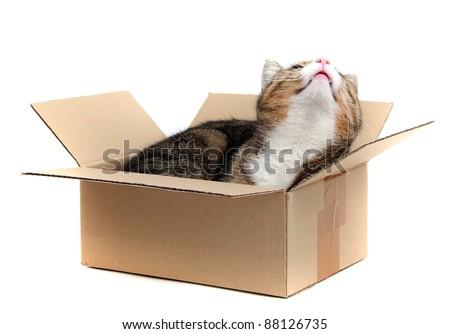 little cat in paper box - stock photo