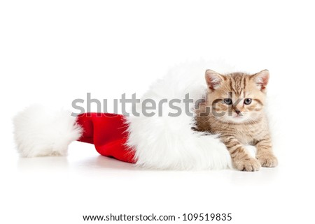 little cat kitten in a Christmas santa claus hat on a white background - stock photo