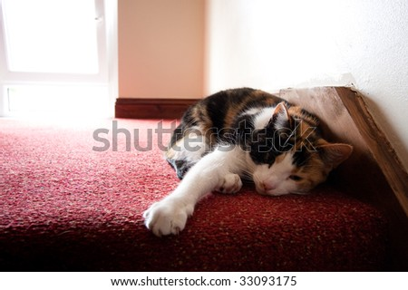 Little cat lying inside a house on red carpet. - stock photo