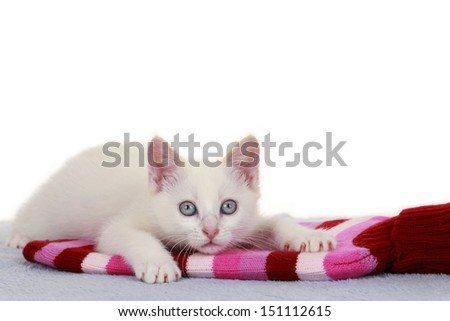 Little cat on hot bottle