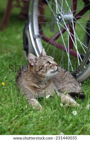 Little cat on the grass and bike - stock photo