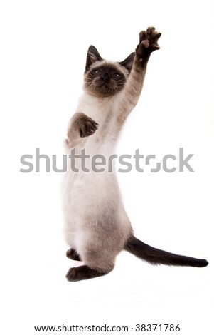 Little cat on white background - stock photo