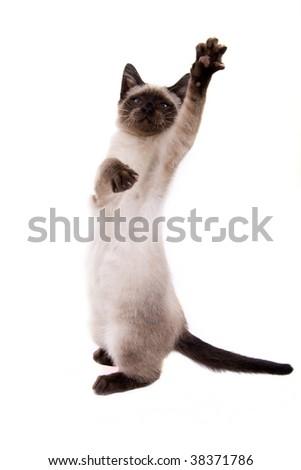Little cat on white background - stock photo
