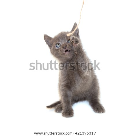 Little cat on white background