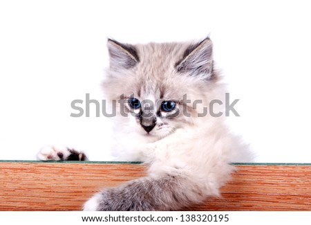 little cat peeks out from behind the board - stock photo