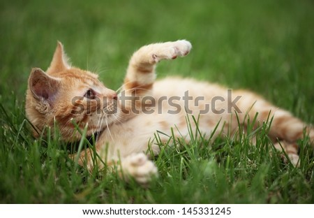 Little cat playing in grass. Selective focus, shallow DOF. - stock photo