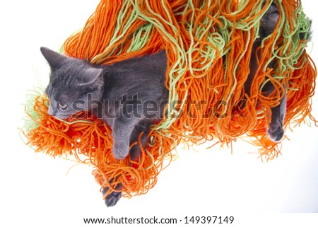Little Cat Playing With a Ball Of Wool