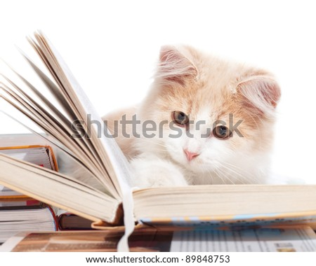 Little cat read a book - stock photo