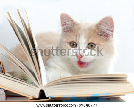 Little cat read a book - stock photo