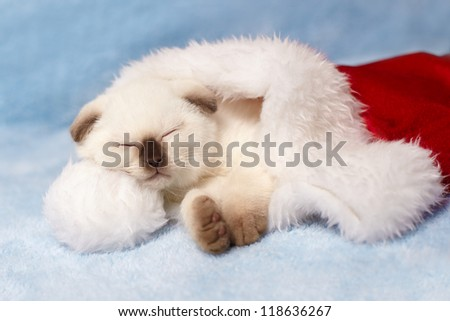 Little cat sleeping inside Santa's hat