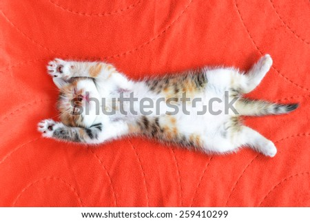 Little cat sleeping on a red blanket - stock photo