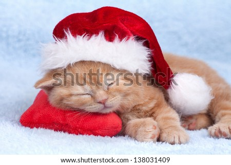 Little cat wearing Santa's hat sleeping on the red heart-shaped pillow - stock photo